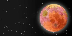 pleine lune fleurs